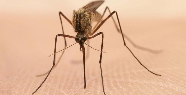 Ayvalık böcek ilaçlama