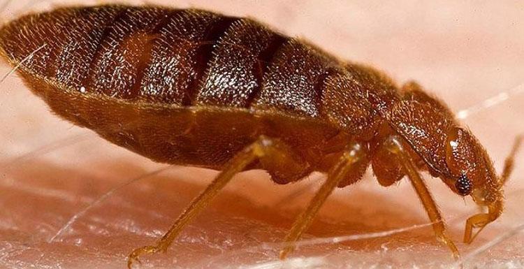 Burhaniye böcek ilaçlama