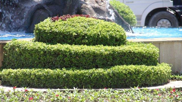 Bahçeyi güzelleştirelim - bir çim dikim